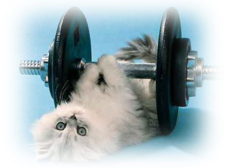 Cat and barbell